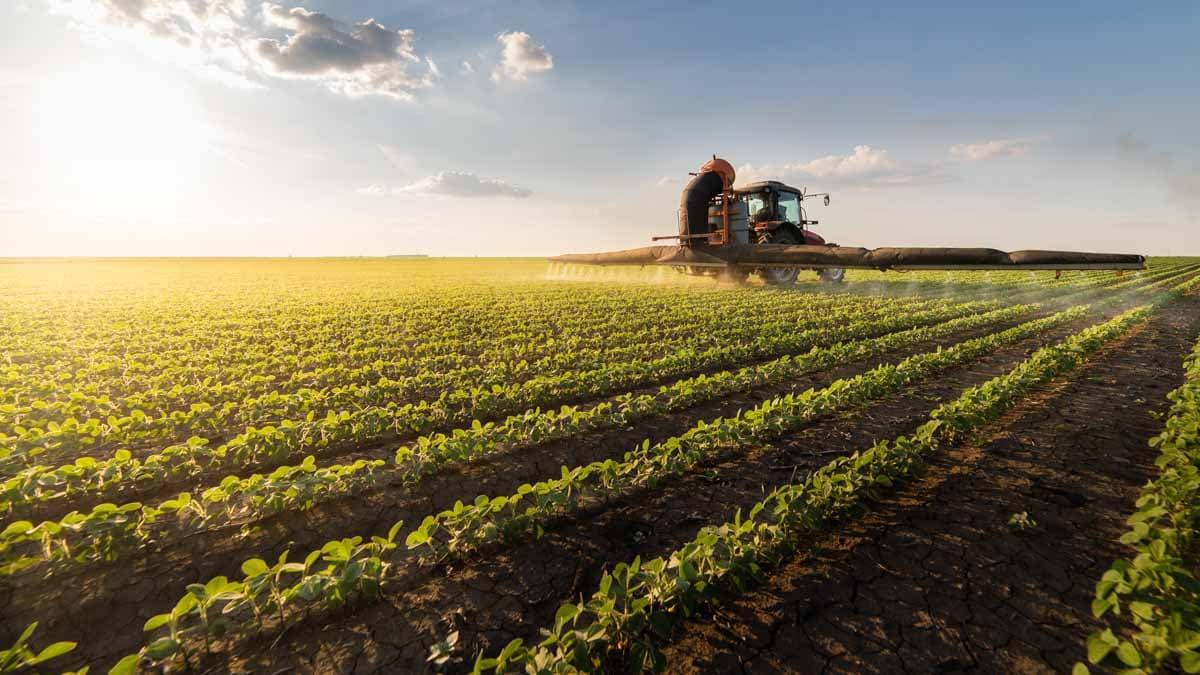 Un tracteur dans un champ de cultures fourragères.